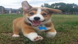 Chú chó vui vẻ trở thành hiện tượng ảnh chế mới