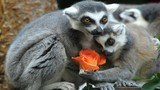 Khi động vật chuẩn bị Valentine rầm rộ hơn con người