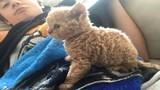 """Xem chú mèo kỳ lạ, lai cừu gây """"sốt"""" vì quá độc lạ"""