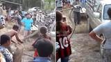 Hãi hùng đơn độc đụng độ rắn hổ mang chúa rướn người cao 1m80