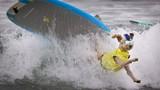 Cuộc thi lướt sóng dành cho chó cưng đầy kịch tính