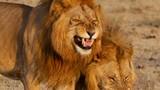 Ngắm động vật cười tươi quên trời đất, bỏ hết muộn phiền