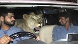 """Độc đáo cặp anh em chăm, nuôi sư tử như """"vua con"""""""