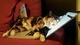 """Mèo nghịch máy tính, không ngờ chủ nhân """"hoan hỉ"""" chỉ vì..."""
