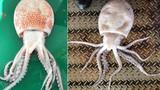 Đi câu bạch tuộc, sửng sốt phát hiện biến thể cực hiếm
