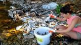 Độc chiêu xử lý cá chết hàng loạt trong lịch sử môi trường