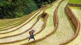 Việt Nam đẹp mê hồn trong ống kính nhiếp ảnh gia Mỹ