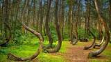 Bí ẩn khó giải ở khu rừng Hoia Baciu