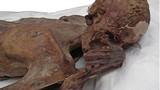 Bí mật kinh thiên về hình xăm cổ nhất thế giới
