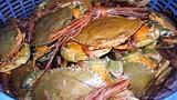 Điểm danh những loại hải sản tác dụng như... viagra