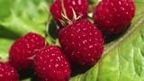 Ngừa ung thư từ những thực phẩm đơn giản