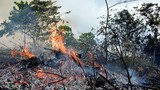 Cháy rừng dữ dội ở Hạ Long, tạm dừng thi công