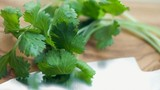 Bài thuốc từ rau mùi ta trị các bệnh mùa đông