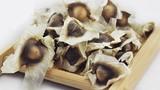 Công dụng chữa bệnh cực tốt của hạt chùm ngây