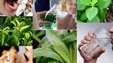 Bài thuốc trị hôi miệng khó ngửi bằng thảo dược dễ tìm