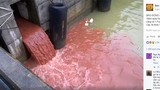 Tổng Cục Môi trường: Clip cống nước xả thải màu đỏ là bịa đặt