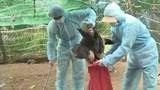 Khẩn cấp ngăn chặn ổ dịch cúm A H5N6 có thể lây lan sang người
