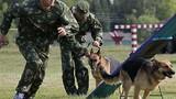 Quân đội Nga dùng chó, hải cẩu để tác chiến