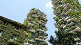 """Video: Choáng """"chung cư trong rừng cây"""" giá cắt cổ của Trung Quốc"""
