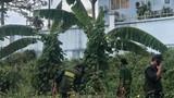 Nóng: Bắt hai nhân viên VEC E cũ cướp trạm thu phí TPHCM-Long Thành-Dầu Giây