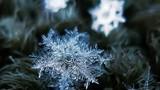 Ngỡ ngàng ngắm hoa tuyết đẹp siêu thực