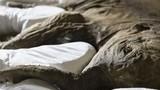Ngắm trọn bộ hóa thạch voi cổ hoàn chỉnh nhất