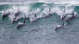 Cá heo lướt sóng - cảnh đẹp đến choáng ngợp