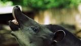 Thế giới động vật đặc sắc tuyệt vời ở sở thú Ba Lan