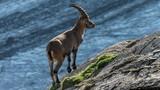 Chùm ảnh đẹp tuyệt mỹ về thiên nhiên hoang dã