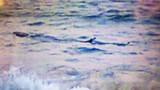Cảnh báo nguy hiểm cá lạ xuất hiện dọc biển Tuy Hòa