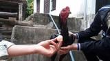 Gà trống chọi ở Việt Nam đẻ trứng gây sửng sốt