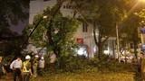 Hà Nội: Cây xanh đổ sau mưa làm một người nhập viện