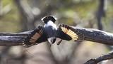 Đẹp mê mẩn những loài chim cực hiếm và lạ sau đây