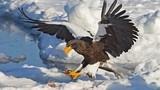 """Chim ăn thịt khổng lồ mệnh danh """"chúa tể bầu trời"""""""