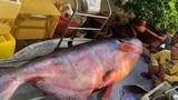 """Những """"thủy quái khổng lồ"""" bị bắt ở sông Mê Kông đưa về VN"""