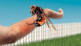 Đây là cách giúp bạn giữ mạng khi bị cả đàn ong bắp cày tấn công