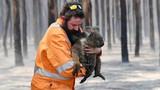 """Cháy rừng ở Úc: """"Kế hoạch hoá dân số"""" giết 10.000 con lạc đà"""