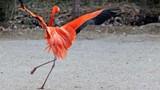 """Thán phục những """"vũ công"""" tuyệt đỉnh thế giới động vật"""