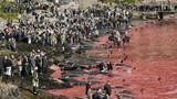 Thảm sát cá voi khủng khiếp ở Faroe Islands
