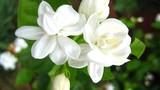 Hoa nào không nên cắm trên bàn thờ?