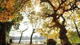 Thời tiết hôm nay 16/11: Hà Nội nắng đẹp khi đón gió lạnh