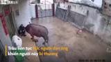 Video: Bị xua đuổi, trâu điên húc liên tiếp khiến người đàn ông gãy xương