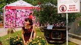 """Thất vọng với Lễ hội hoa hồng, gái trẻ vẫn cố  """"tự sướng"""""""