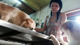 Chuyện về cô nàng độc thân nuôi 91 con chó ở Sài Gòn