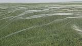 Mạng nhện khổng lồ che phủ cả cánh đồng tại New Zealand