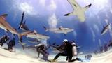 Rợn người trước cảnh thợ lặn bị 80 con cá mập bao vây