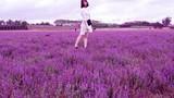 Nghỉ Tết dương: Giới trẻ mê mẩn với cánh đồng hoa tím lạ