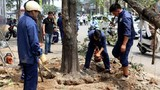 Hà Nội vẫn chưa kỷ luật cán bộ vụ chặt cây xanh