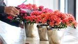 Bí kíp chăm sóc hoa đỗ quyên nở đẹp chơi Tết