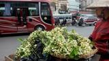Ảnh: Nồng nàn hoa bưởi ngát hương phố Hà Nội